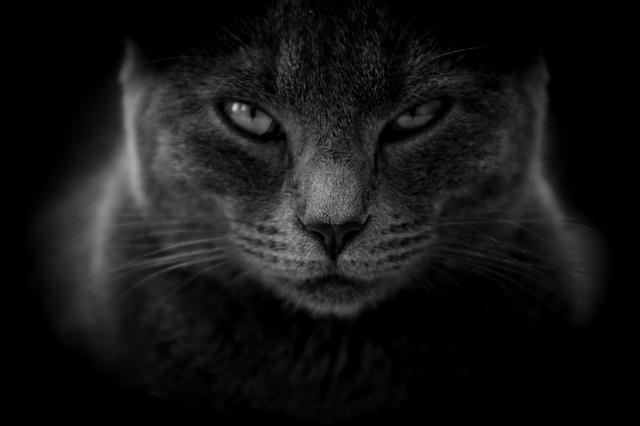 猫の命を奪う