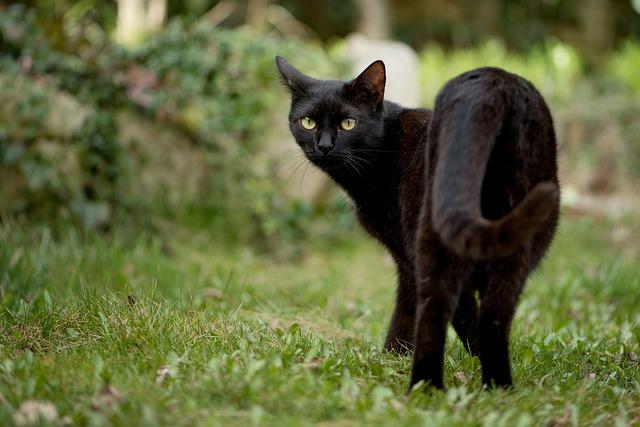 逃げる黒猫