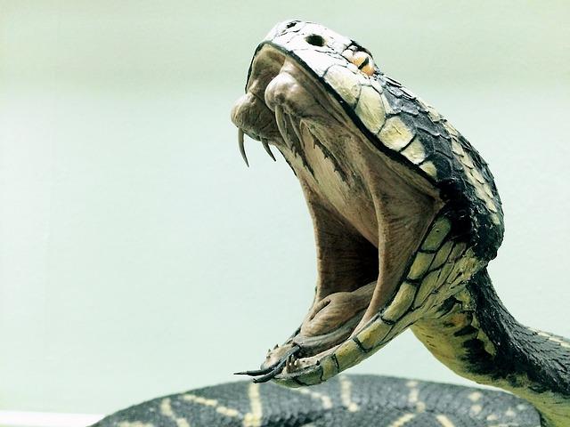 蛇に噛まれる