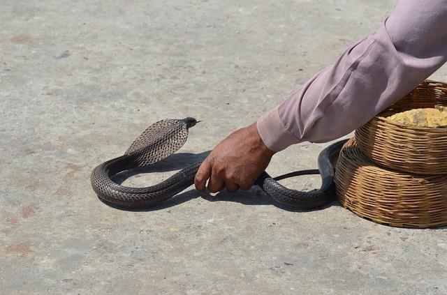 蛇を捕まえる