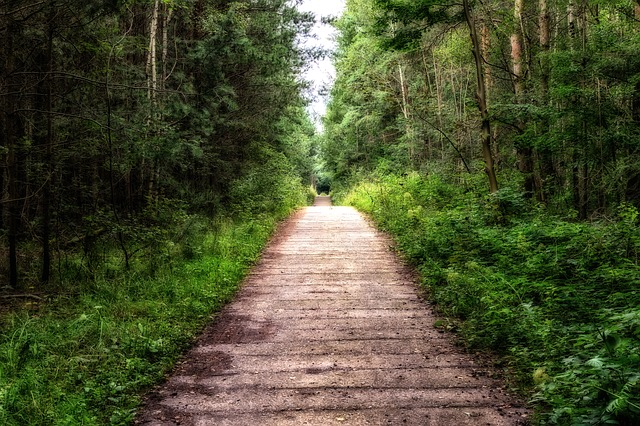 道で迷子になる