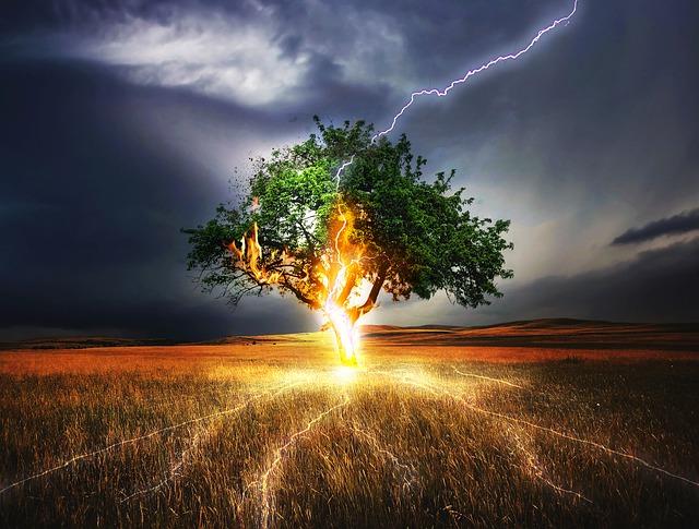雷が木に落ちる