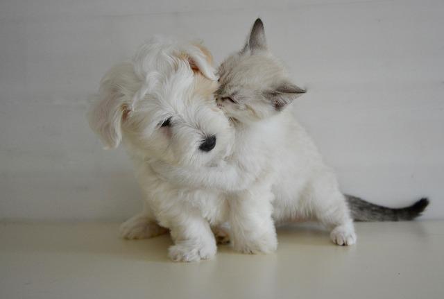 動物とキス